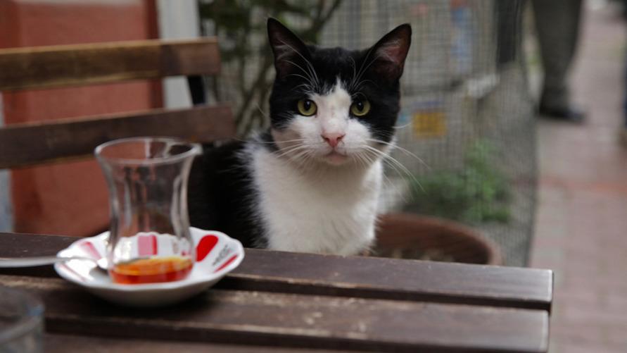 Как создавался фильм Город кошек Гамзис КультКино cultofcinema.com